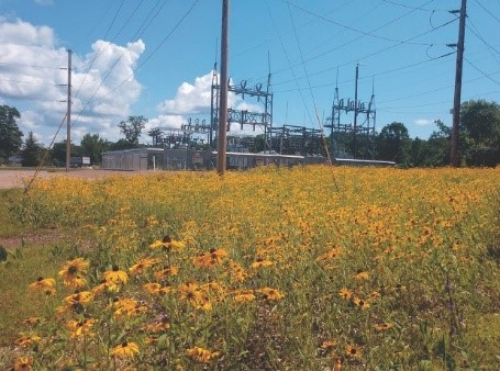 Flowers at substation